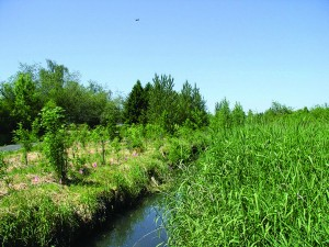 Join Us on June 17th for the Launch of the New Water Quality Trading Reference