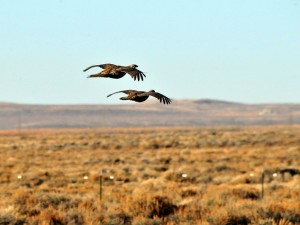 Saving Sage-Grouse in Oregon: All Lands, All Threats