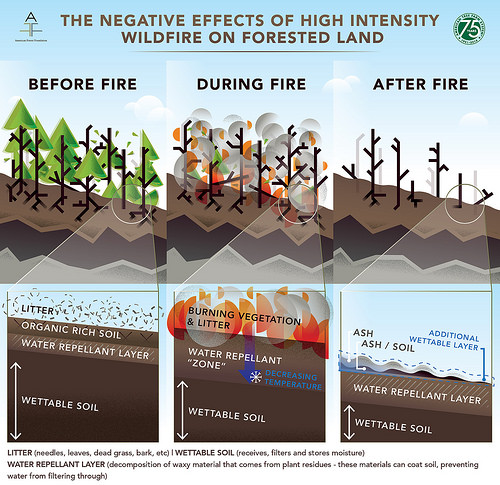 "This graph shows how high-intensity wildfires impair the forest's natural ability to filter and absorb water, which then negatively affects the health of water bodies. Leaf litter burns up, baking the ground underneath, and leaves behind a water repellent layer that prevents rainfall from draining into the ""wettable"" soil. This causes increased flooding and runoff with soil and debris to enter rivers and streams. Graphic courtesy of the American Forest Foundation."