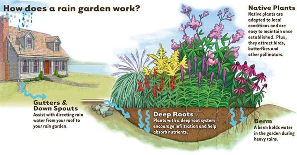 Rain gardens, like this one, can help a county meet their mandated water quality targets, but communicating their direct benefit to people -- managing flooding in yards -- is more meaningful to homeowners. Image credit: Tip of the Mitt Watershed Council.