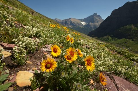wildflowers willamette partnership program