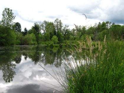 Markets for Better Water Quality