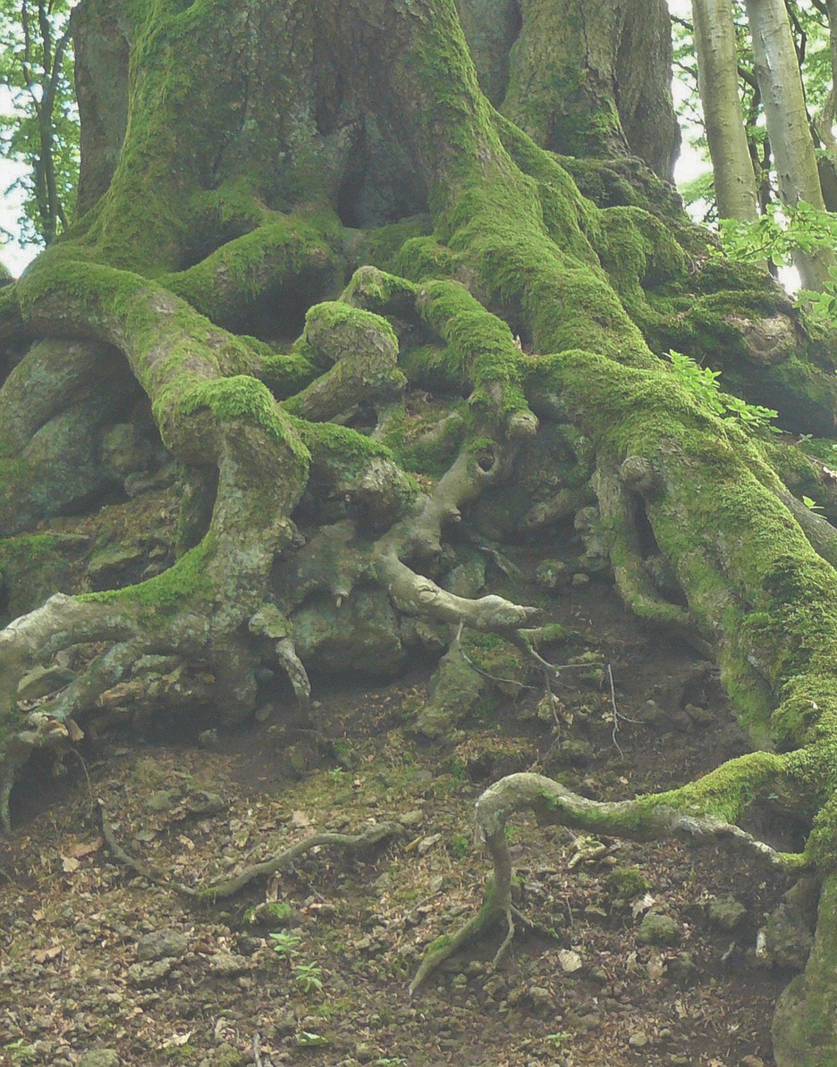 root image, half, transparent