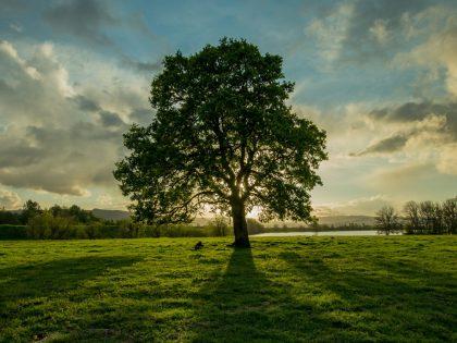 Communications Strategy for Oak & Prairie