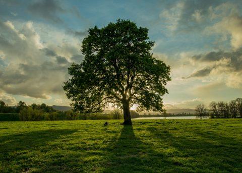 oak accord feature image