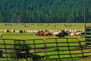 national network water quality trading, fenced cattle, clean water services