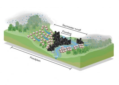 Nine Ways to Start Connecting Stormwater and Floodplain Management: A New Report