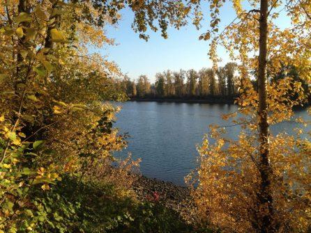 Willamette River Fall Leaves