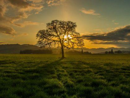Sustainable Northwest Wood Partners for Oak
