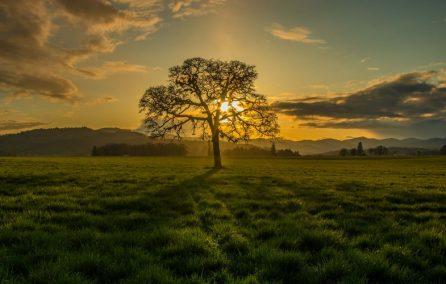 oak sunset image by Bob Applegate