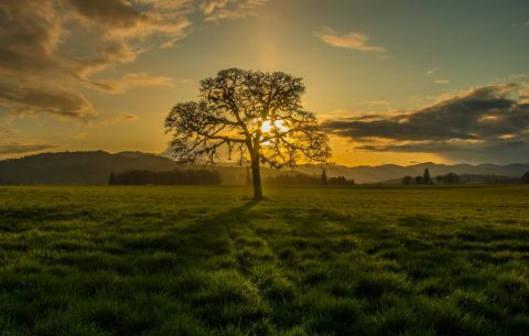 oak sunset image by Bob Applegate
